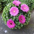 boule-de-buis-avec-fleurs